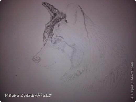 Решила не описывать, как рисовала, в интернете есть уроки, как рисовать такого волка))Но я рисовала не по урокам, просто с картинки) А4 фото 4