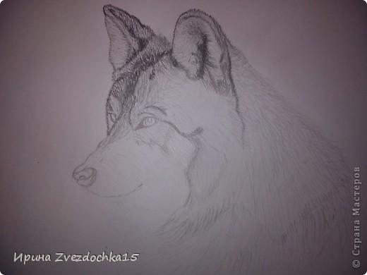 Решила не описывать, как рисовала, в интернете есть уроки, как рисовать такого волка))Но я рисовала не по урокам, просто с картинки) А4 фото 5