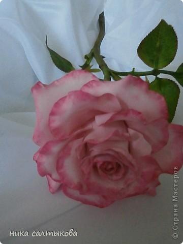 Приветсвую  вас, друзья!!! Попросили слепить розу для магазина. Еще нужно слепить орхидею и сакуру, орхидея на подходе, скоро выставлю))) фото 1