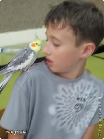 Пятиклассник Маор демонстрирует изготовленную им птицу-марионетку. фото 42