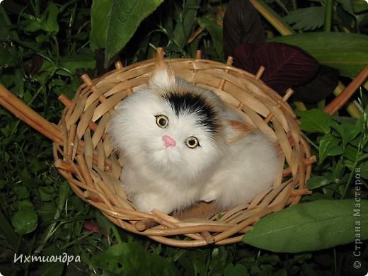 А знаете, друзья, огляделась я недавно вокруг и поняла... А ведь кошек-то у меня совсем немало! И даже много! Настоящие и ненастоящие, покупные и сделанные своими руками, съедобные и несъедобные. Заинтриговала? Тогда поехали! Эти два брата-акробата сделаны из солёного теста. Идеей вдохновилась от работ ANAID http://stranamasterov.ru/node/114243. Только пока это полуфабрикаты, ещё до конца не расписанные. Хочется придумать что-то особенное... фото 20