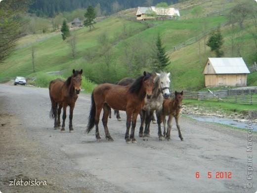 Добрый день, жители СМ! На прошлой неделе я с родителями съездили к бабушке в Закарпатье на пару дней и теперь хочу поделиться с вами красотой этого края. фото 44