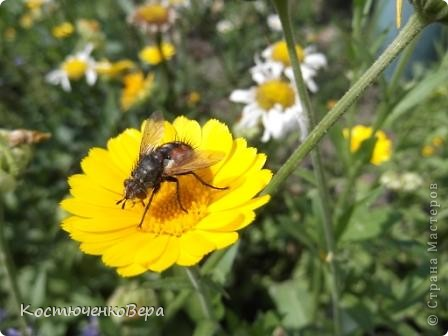 Мне повезло встретиться с чудесной бабочкой. фото 12