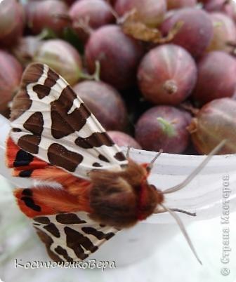 Мне повезло встретиться с чудесной бабочкой. фото 2