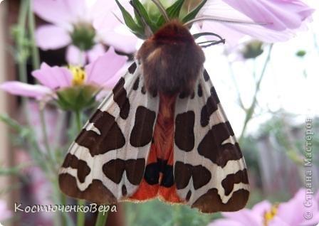 Мне повезло встретиться с чудесной бабочкой. фото 7