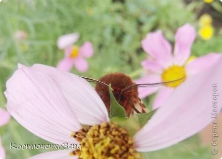 Мне повезло встретиться с чудесной бабочкой. фото 3