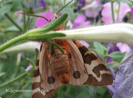Мне повезло встретиться с чудесной бабочкой. фото 21