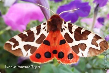 Мне повезло встретиться с чудесной бабочкой. фото 6
