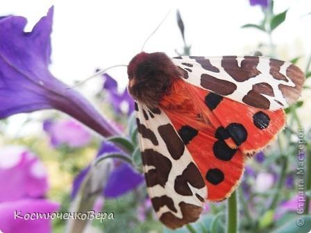 Мне повезло встретиться с чудесной бабочкой. фото 1