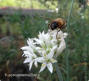 Мне повезло встретиться с чудесной бабочкой. фото 9