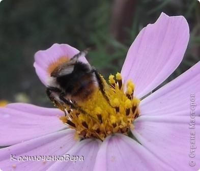 Мне повезло встретиться с чудесной бабочкой. фото 11