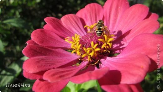 Всем привет и добро пожаловать в царство моей второй мамы!  Очень люблю в СМ смотреть фоторепортажи с цветами, выращенными на дачах наших мастериц. Эти цветы - не моя заслуга, они все посажены и взращены трудолюбивыми ручками моей свекрови.  И пока муж занимался поливкой, я устроила цветочкам небольшую фотосессию - ведь цветы и созданы для того, чтобы ими любоваться!  Желаю приятного просмотра и солнечно-летнего настроения! фото 1