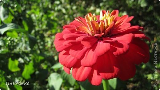 Всем привет и добро пожаловать в царство моей второй мамы!  Очень люблю в СМ смотреть фоторепортажи с цветами, выращенными на дачах наших мастериц. Эти цветы - не моя заслуга, они все посажены и взращены трудолюбивыми ручками моей свекрови.  И пока муж занимался поливкой, я устроила цветочкам небольшую фотосессию - ведь цветы и созданы для того, чтобы ими любоваться!  Желаю приятного просмотра и солнечно-летнего настроения! фото 2