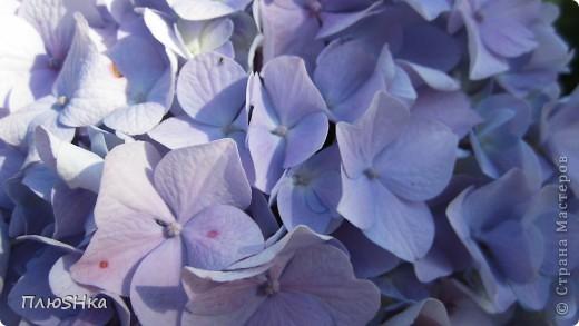 Всем привет и добро пожаловать в царство моей второй мамы!  Очень люблю в СМ смотреть фоторепортажи с цветами, выращенными на дачах наших мастериц. Эти цветы - не моя заслуга, они все посажены и взращены трудолюбивыми ручками моей свекрови.  И пока муж занимался поливкой, я устроила цветочкам небольшую фотосессию - ведь цветы и созданы для того, чтобы ими любоваться!  Желаю приятного просмотра и солнечно-летнего настроения! фото 5