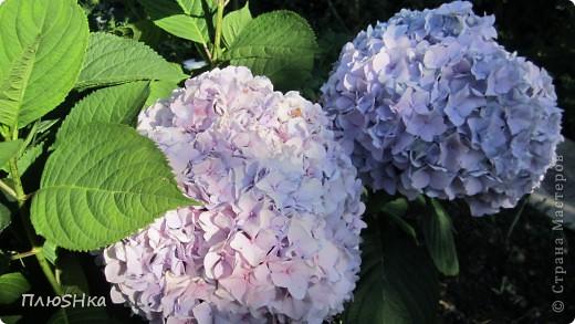 Всем привет и добро пожаловать в царство моей второй мамы!  Очень люблю в СМ смотреть фоторепортажи с цветами, выращенными на дачах наших мастериц. Эти цветы - не моя заслуга, они все посажены и взращены трудолюбивыми ручками моей свекрови.  И пока муж занимался поливкой, я устроила цветочкам небольшую фотосессию - ведь цветы и созданы для того, чтобы ими любоваться!  Желаю приятного просмотра и солнечно-летнего настроения! фото 6