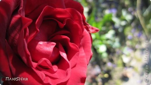 Всем привет и добро пожаловать в царство моей второй мамы!  Очень люблю в СМ смотреть фоторепортажи с цветами, выращенными на дачах наших мастериц. Эти цветы - не моя заслуга, они все посажены и взращены трудолюбивыми ручками моей свекрови.  И пока муж занимался поливкой, я устроила цветочкам небольшую фотосессию - ведь цветы и созданы для того, чтобы ими любоваться!  Желаю приятного просмотра и солнечно-летнего настроения! фото 8