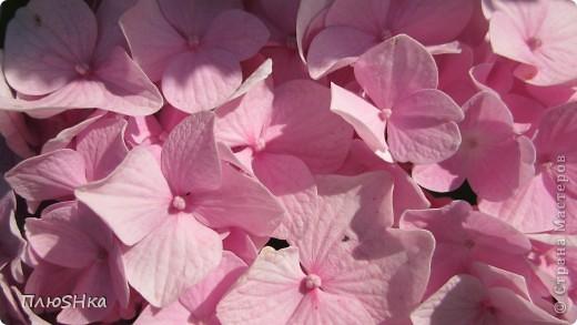 Всем привет и добро пожаловать в царство моей второй мамы!  Очень люблю в СМ смотреть фоторепортажи с цветами, выращенными на дачах наших мастериц. Эти цветы - не моя заслуга, они все посажены и взращены трудолюбивыми ручками моей свекрови.  И пока муж занимался поливкой, я устроила цветочкам небольшую фотосессию - ведь цветы и созданы для того, чтобы ими любоваться!  Желаю приятного просмотра и солнечно-летнего настроения! фото 10