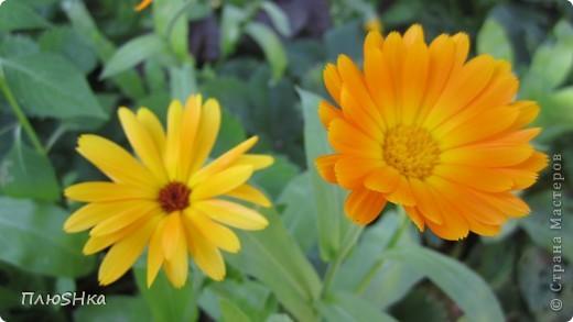 Всем привет и добро пожаловать в царство моей второй мамы!  Очень люблю в СМ смотреть фоторепортажи с цветами, выращенными на дачах наших мастериц. Эти цветы - не моя заслуга, они все посажены и взращены трудолюбивыми ручками моей свекрови.  И пока муж занимался поливкой, я устроила цветочкам небольшую фотосессию - ведь цветы и созданы для того, чтобы ими любоваться!  Желаю приятного просмотра и солнечно-летнего настроения! фото 23