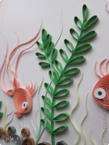 рыбки фото 6