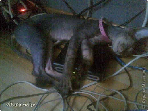 Лежак для кошки. Кошачья корзинка фото 7