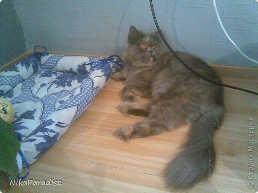 Лежак для кошки. Кошачья корзинка фото 5