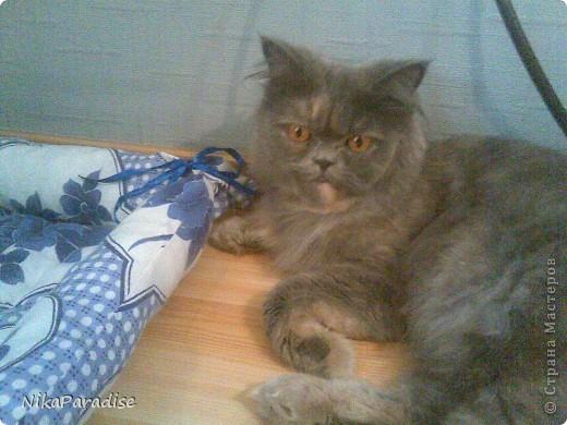 Лежак для кошки. Кошачья корзинка фото 6