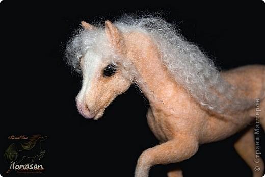 Уэльский пони — порода, известная со времён Юлия Цезаря. В настоящее время в породе различают три типа: уэльский горный пони — наиболее мелкие лошади, не выше 122 см в холке; средний тип — ростом 110—136 см и, наконец, уэльский коб для игры в конное поло — от 137 до 159 см в холке. Последний тип лошадей появился в результате прилития крови чистокровных верховых и арабских жеребцов. Несмотря на небольшой рост, эти лошадки очень пропорциональны и красивы.  Данная лошадка соловой масти (паломино). Общая высота 18 см, высота в холке 13,5 см, длина 19 см.  фото 5