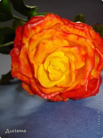 """Я опять к вам с розами,продолжаю уже не просто лепить,а еще потом и """"разукрашивать"""" цветы,процесс очень нравится фото 2"""