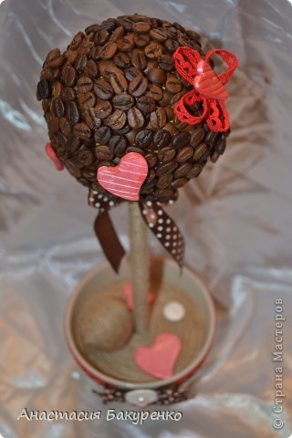 Кофейное деревце. фото 3