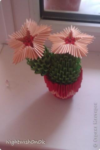 Цветущий кактус фото 2