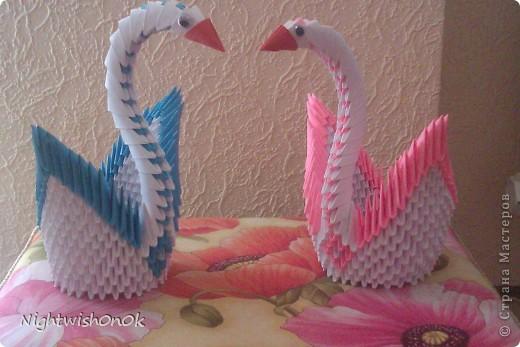 Пара лебедей фото 1