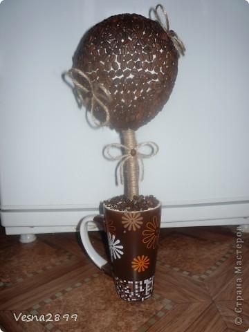 Дерево кофе с молоком фото 1