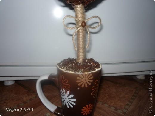 Дерево кофе с молоком фото 2