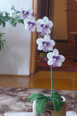 Моя орхидея фото 1