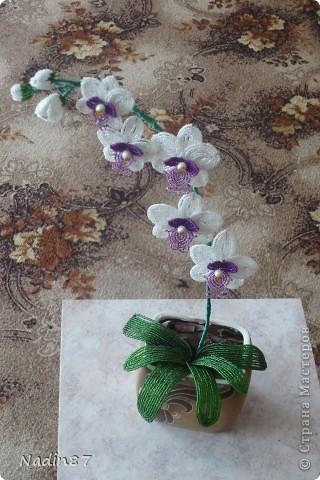 Моя орхидея фото 3