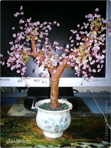 цветущее дерево фото 9