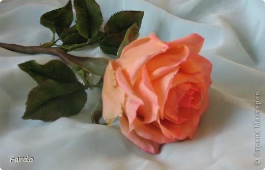 Завтра у моей хорошей знакомой День Рождения. Вот пришлось в авральном режиме лепить розу. На самом деле роз три... но получилась на мой вкус только первая.  Прошу прощение за качество фотографий, быстро лепила, быстро фотографировала... фото 1