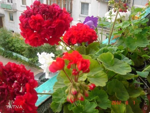 цветочный балкон фото 7