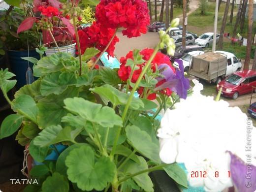цветочный балкон фото 8
