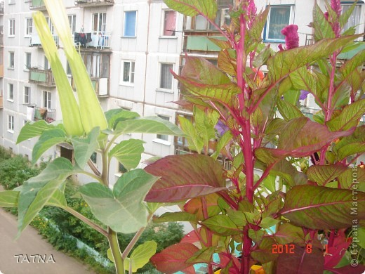 цветочный балкон фото 9