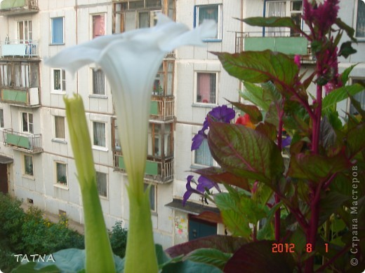 цветочный балкон фото 10