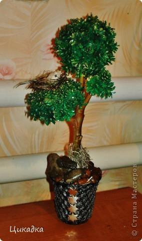 вот такое вот деревце я смастерила в подарок мужу сестры ко дню рождения. райская птичка свила на нем свое гнездышко... вот так вот символично вышло))) фото 2
