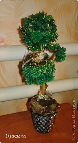 вот такое вот деревце я смастерила в подарок мужу сестры ко дню рождения. райская птичка свила на нем свое гнездышко... вот так вот символично вышло))) фото 1