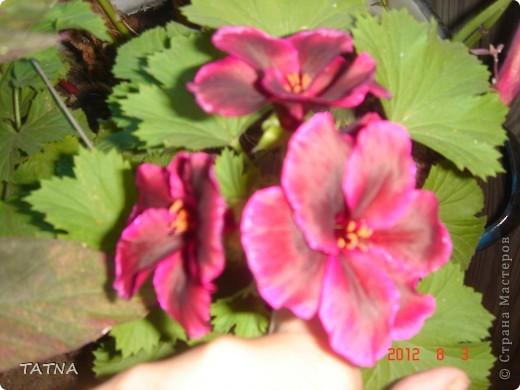 цветочный балкон фото 12