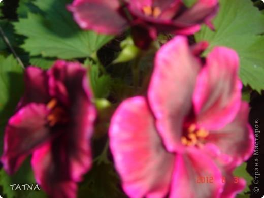 цветочный балкон фото 13