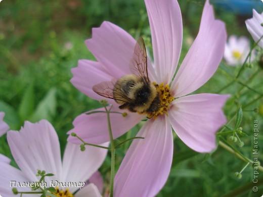 Цветы моего двора фото 9