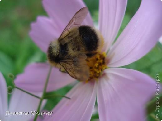Цветы моего двора фото 8