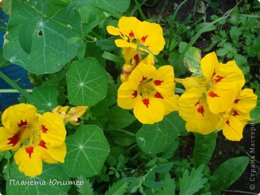 Цветы моего двора фото 12