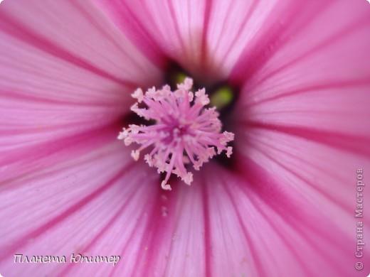 Цветы моего двора фото 14