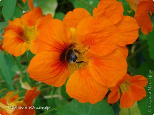 Цветы моего двора фото 15